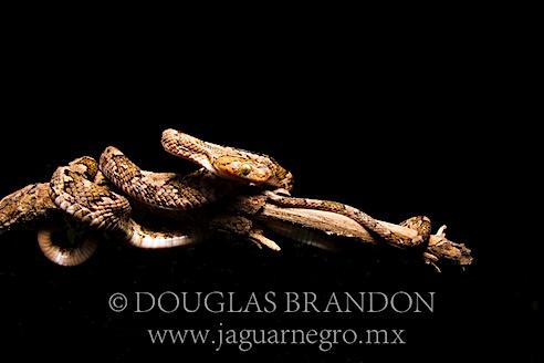 Rancho el Jabalín, San Pedro Totolapam, Oaxaca